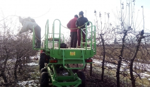 Cięcie drzew z nowej platformy