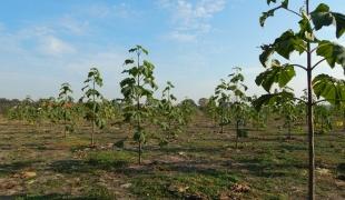 Drzewko tlenowe Oxytree