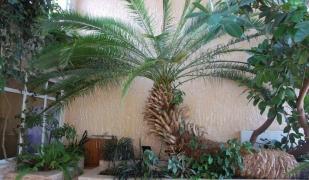 Ciekawostki botaniczne w Zespole Szkół CKR w Starym Lubiejewie